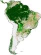 SA vegetation
